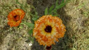 Kelsdonk Gele bloemen in open veld